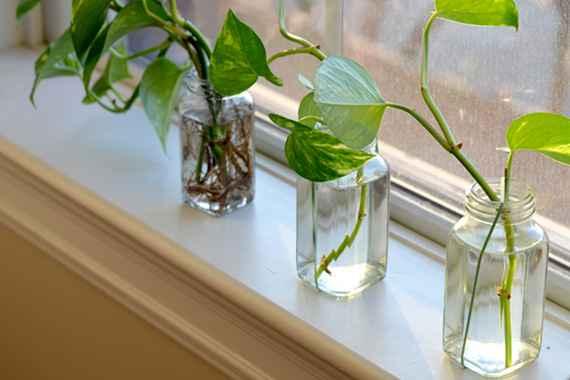 best-plants-indoor-heartleaf-philodendron_2266f59bffbc980698dd0a87ec4f97c0_3x2_jpg_570x380_q85