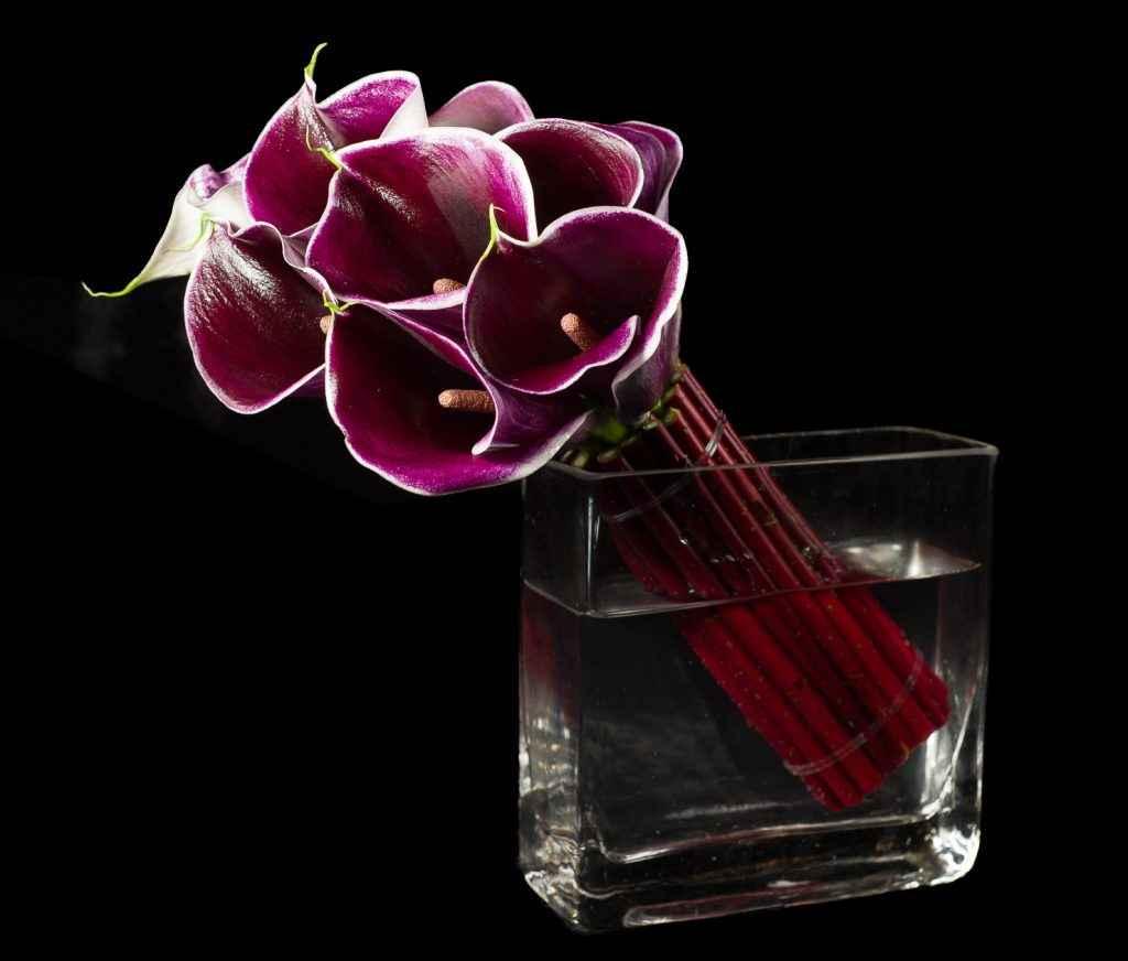 purple calla lily NYC